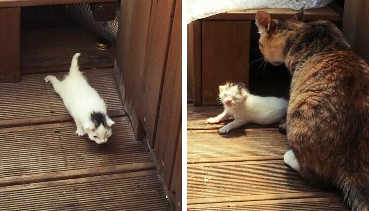정유정 작가님이 직접 찍어서 보내주신 고양이 사진이랍니다. *_*